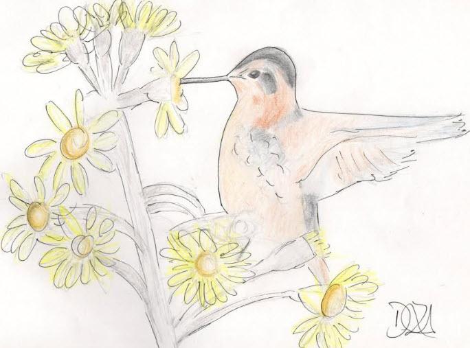 colibri.3