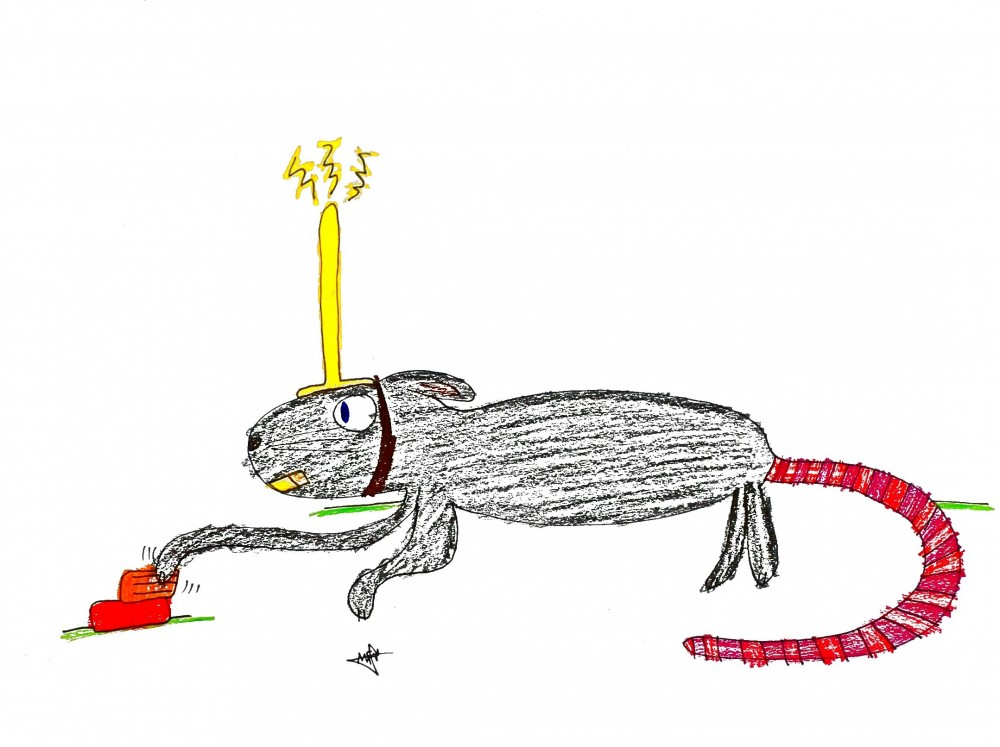 electrodo rata